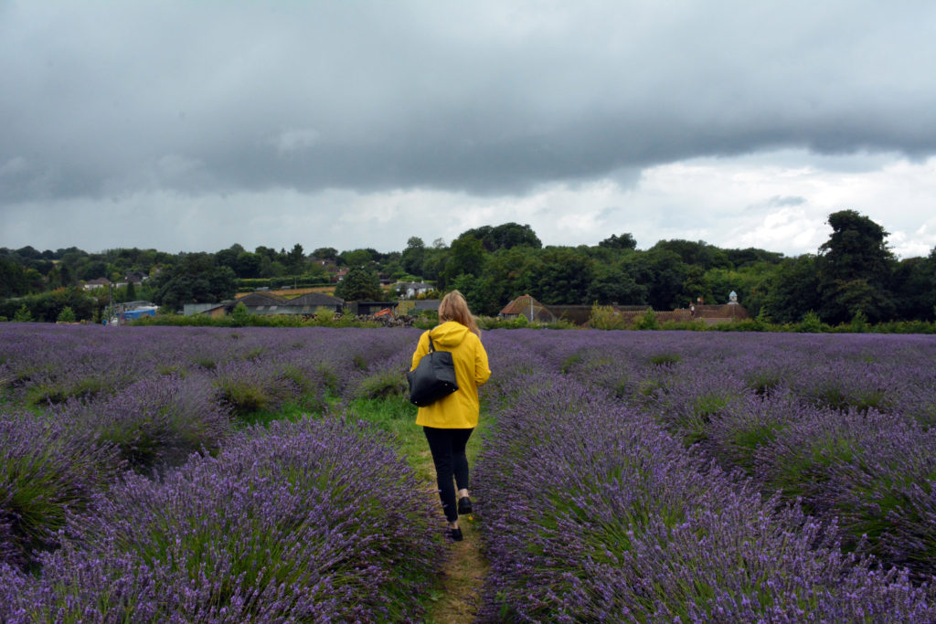 Emily and the lavender