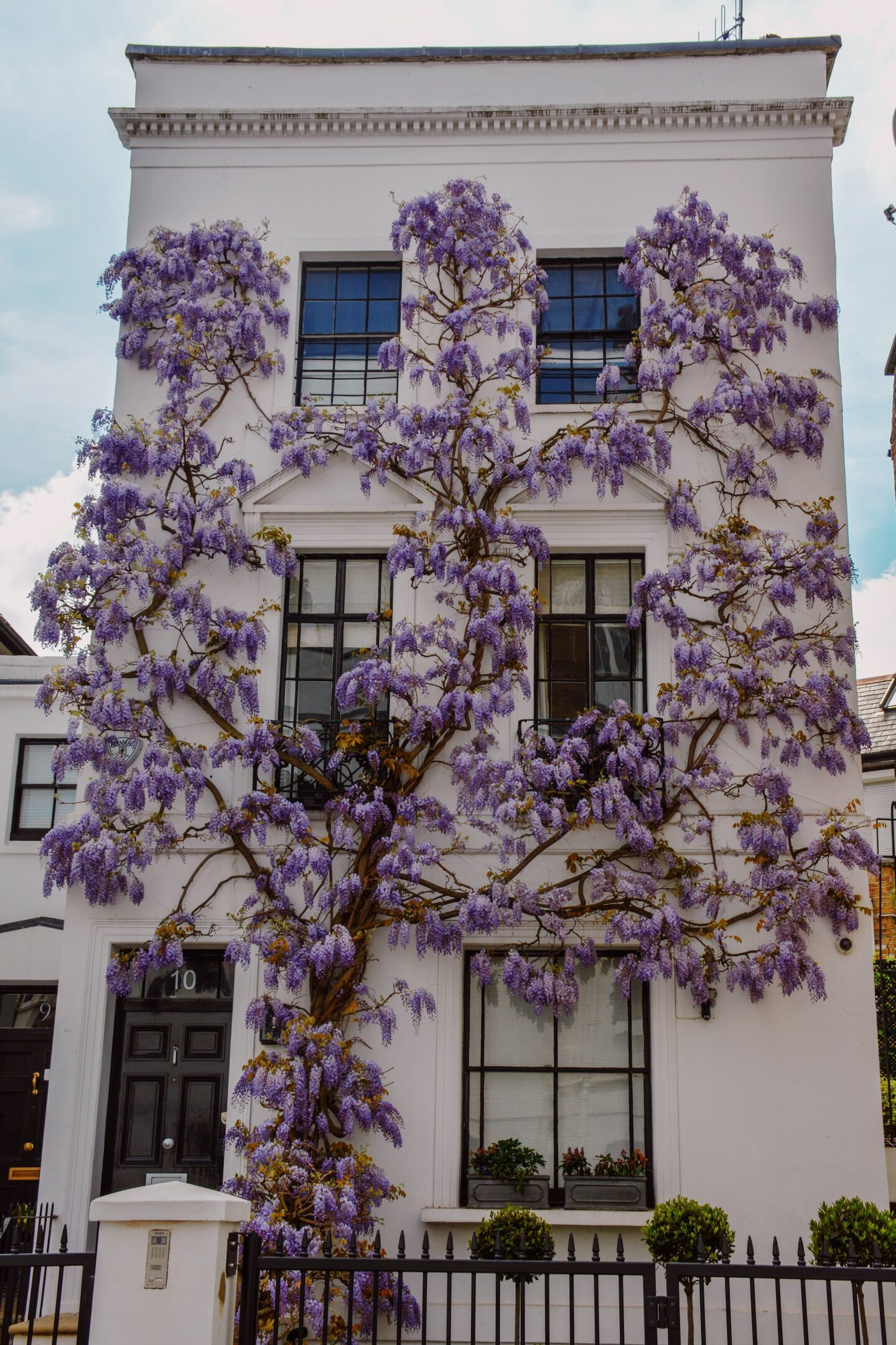 Wisteria house in London